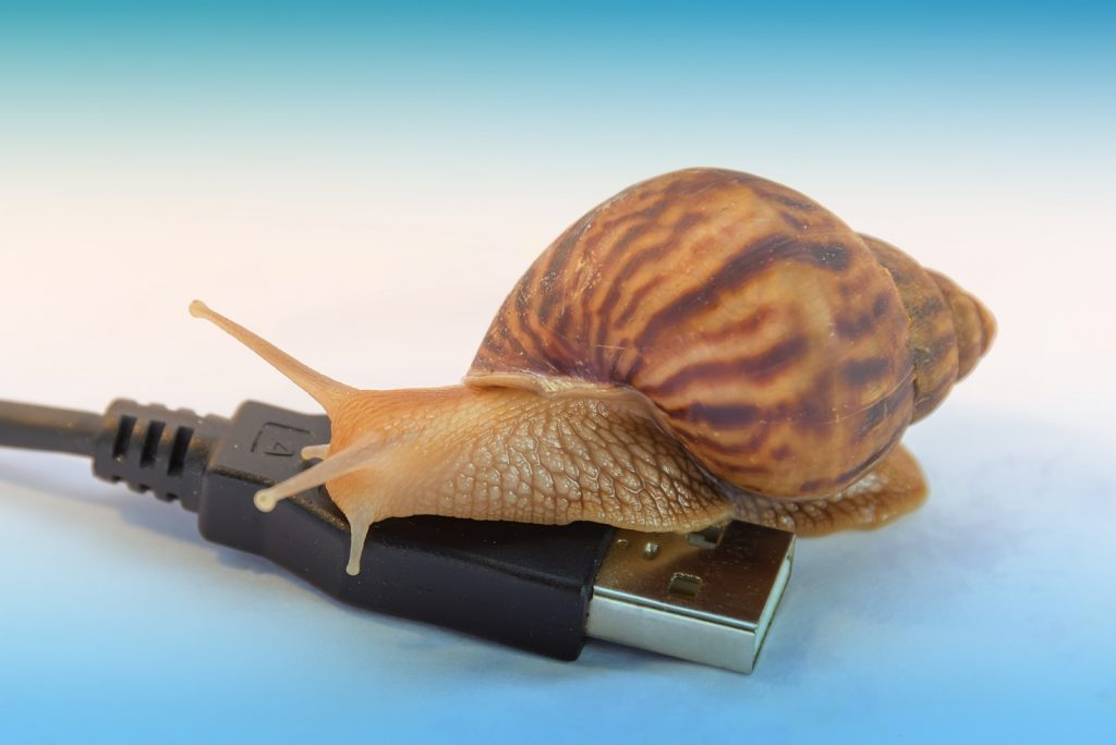 snails and computer cord concept of slow internet